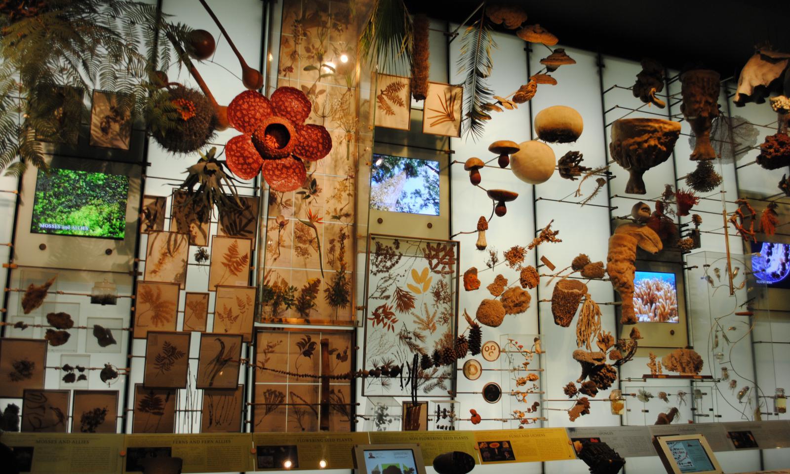 museo amerciano de historia natural (