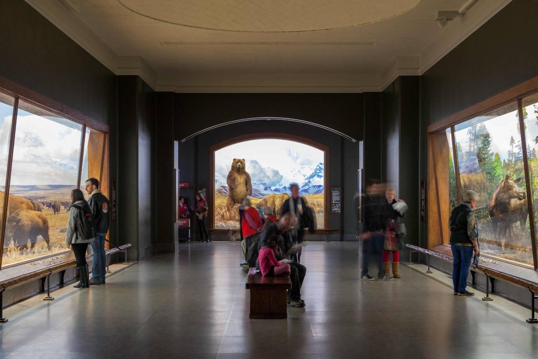 museo amerciano de historia natural