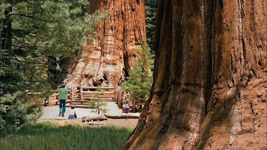 Sequoia Park