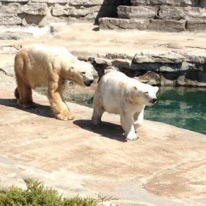 Zoológico de Buffalo Parque Delawere