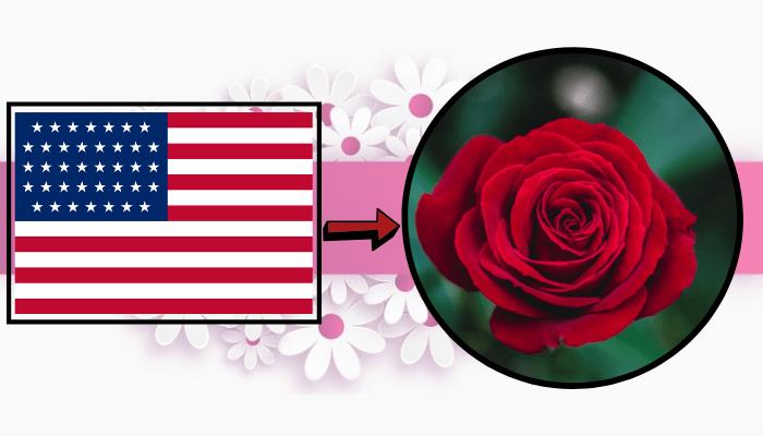Flor nacional Estados Unidos rosa