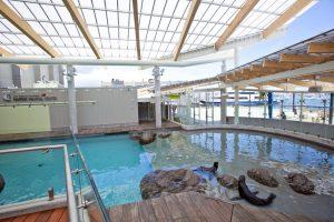 New Balance Foundation Marine Mammal Center