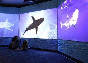 Science of Sharks acuario de boston