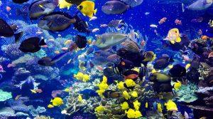 Tropical Gallery acuario de boston