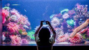 Yawkey Coral Reef Center
